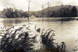 Flood 1916 [Photograph of flood waters showing power lines and weeds surrounded by water].